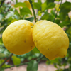 Wart Mole Vanish Ingredient - Lemon